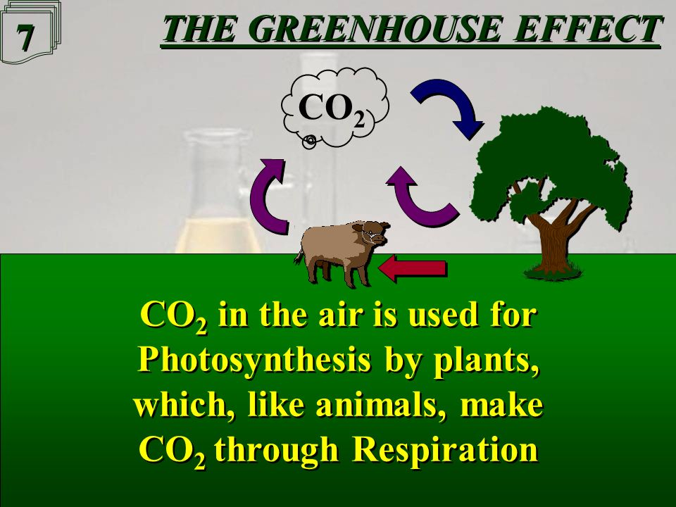 6 6 THE GREENHOUSE EFFECT