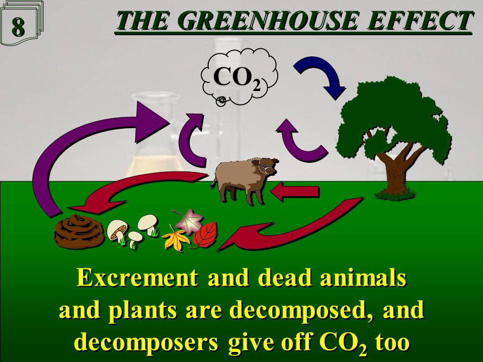 7 7 CO 2 in the air is used for Photosynthesis by plants, which, like animals, make CO 2 through Respiration CO 2 in the air is used for Photosynthesis by plants, which, like animals, make CO 2 through Respiration CO 2