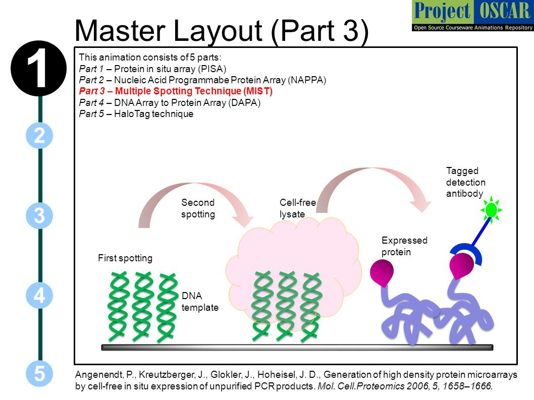 a study of pcr or polymerase chain reaction Target enriched multiplex polymerase chain reaction from 2005-2008 genaco participated in multiple studies such as this correlation study demonstrating tem-pcr.