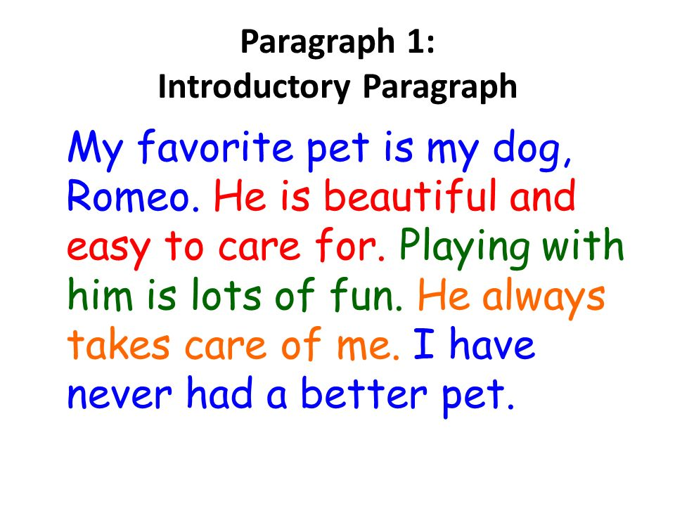 Writing essay my dog