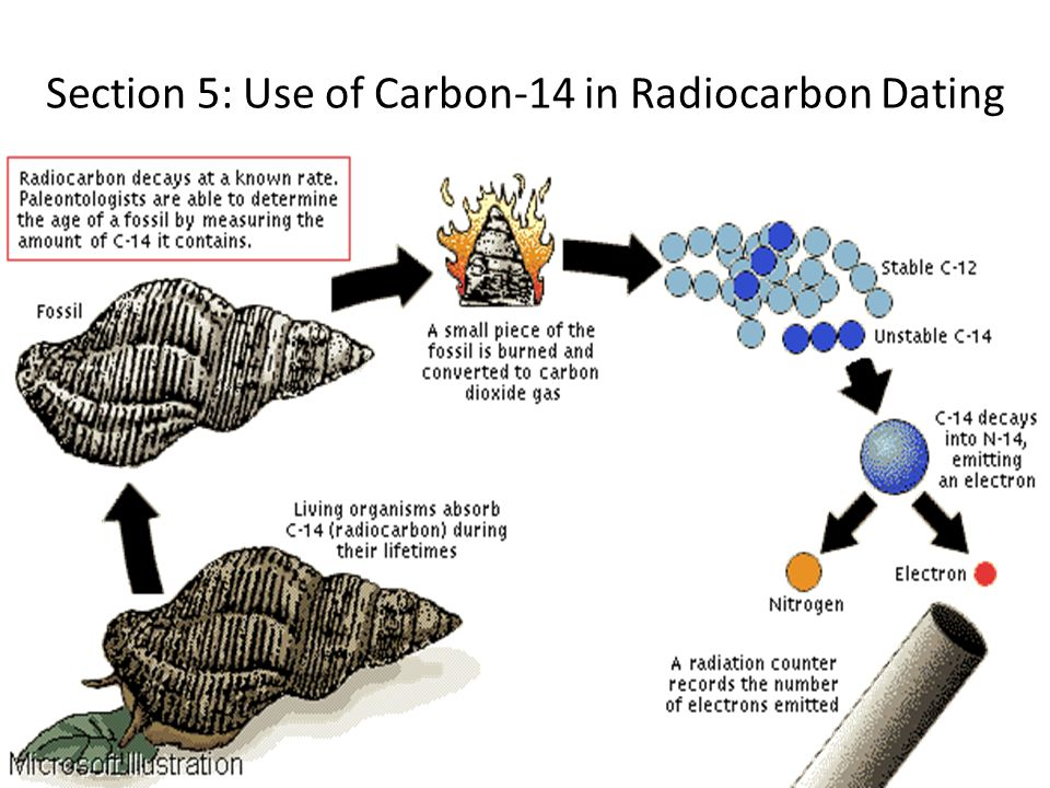 Section 5: Use of Carbon-14 in Radiocarbon Dating
