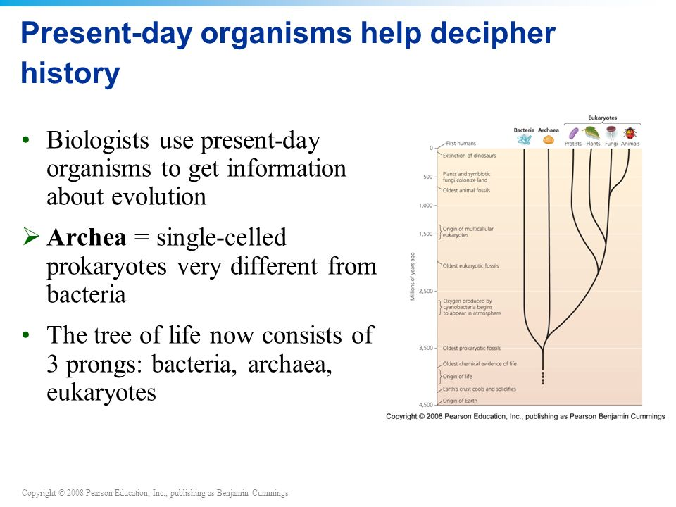 Copyright © 2008 Pearson Education, Inc., publishing as Benjamin Cummings Present-day organisms help decipher history Biologists use present-day organisms to get information about evolution  Archea = single-celled prokaryotes very different from bacteria The tree of life now consists of 3 prongs: bacteria, archaea, eukaryotes