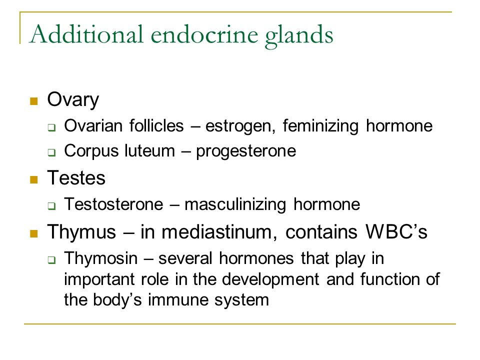 Additional endocrine glands Ovary  Ovarian follicles – estrogen, feminizing hormone  Corpus luteum – progesterone Testes  Testosterone – masculinizing hormone Thymus – in mediastinum, contains WBC's  Thymosin – several hormones that play in important role in the development and function of the body's immune system