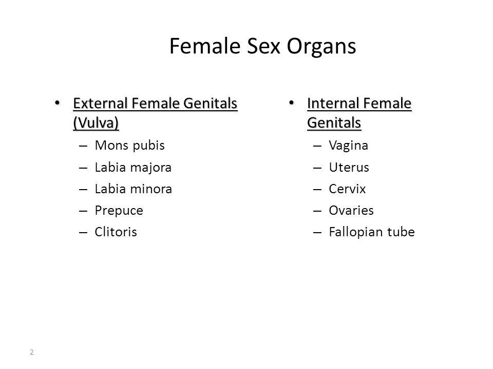 Female Sex Organs 2 External Female Genitals (Vulva) External Female Genitals (Vulva) – Mons pubis – Labia majora – Labia minora – Prepuce – Clitoris
