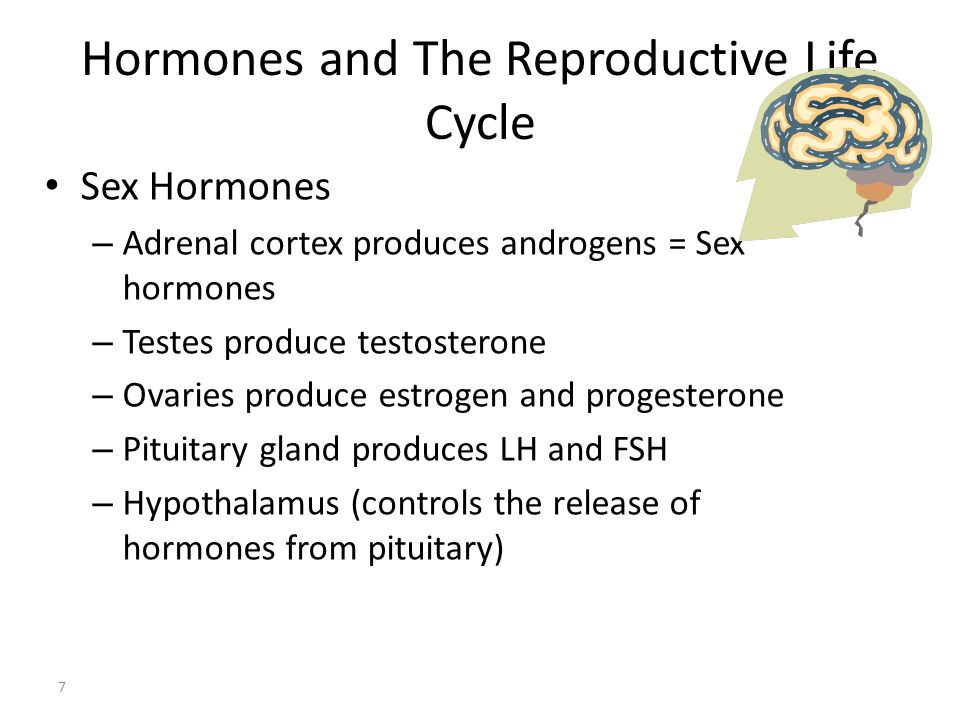Hormones and The Reproductive Life Cycle 7 Sex Hormones – Adrenal cortex produces androgens = Sex hormones – Testes produce testosterone – Ovaries pro