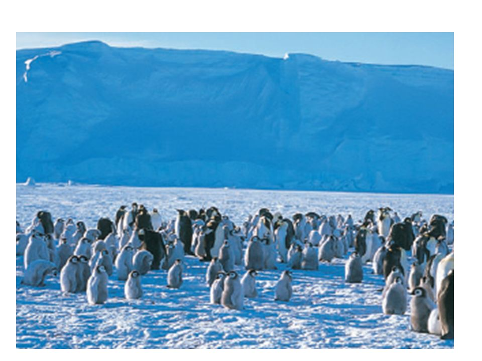 Penguins huddle together to reduce exposed surface area and create wind breaks.