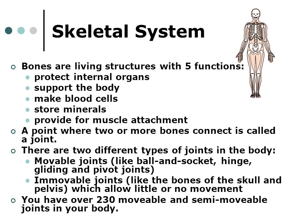 Introduction To The Human Body Skeletal System The Function Of The