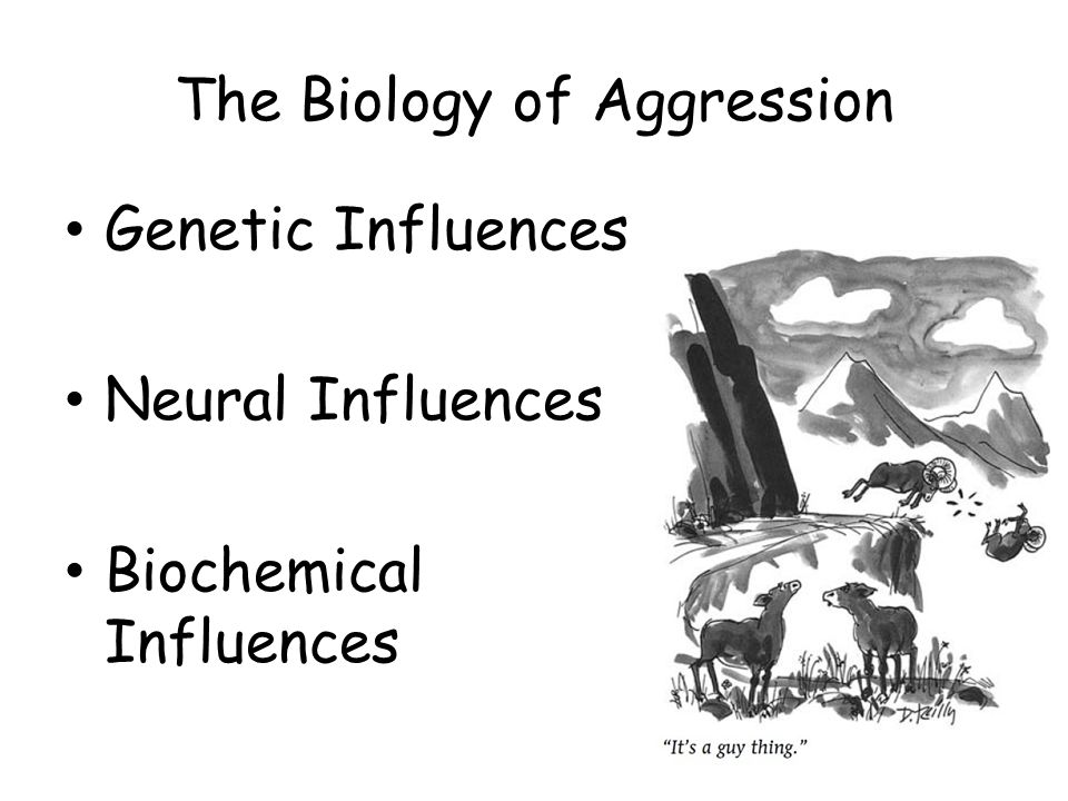 gentic influences on aggression Start studying genetic influences on aggression learn vocabulary, terms, and more with flashcards, games, and other study tools.