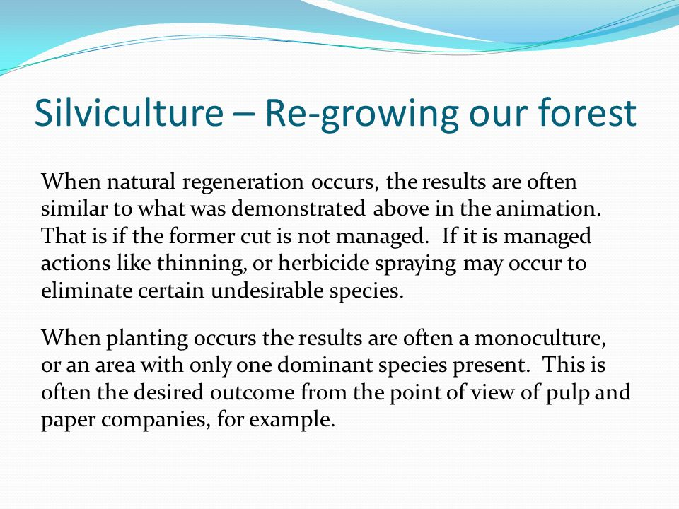 Silviculture – Re-growing our forest When natural regeneration occurs, the results are often similar to what was demonstrated above in the animation.