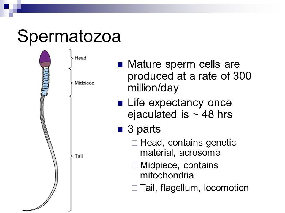 Sperm cell physiology