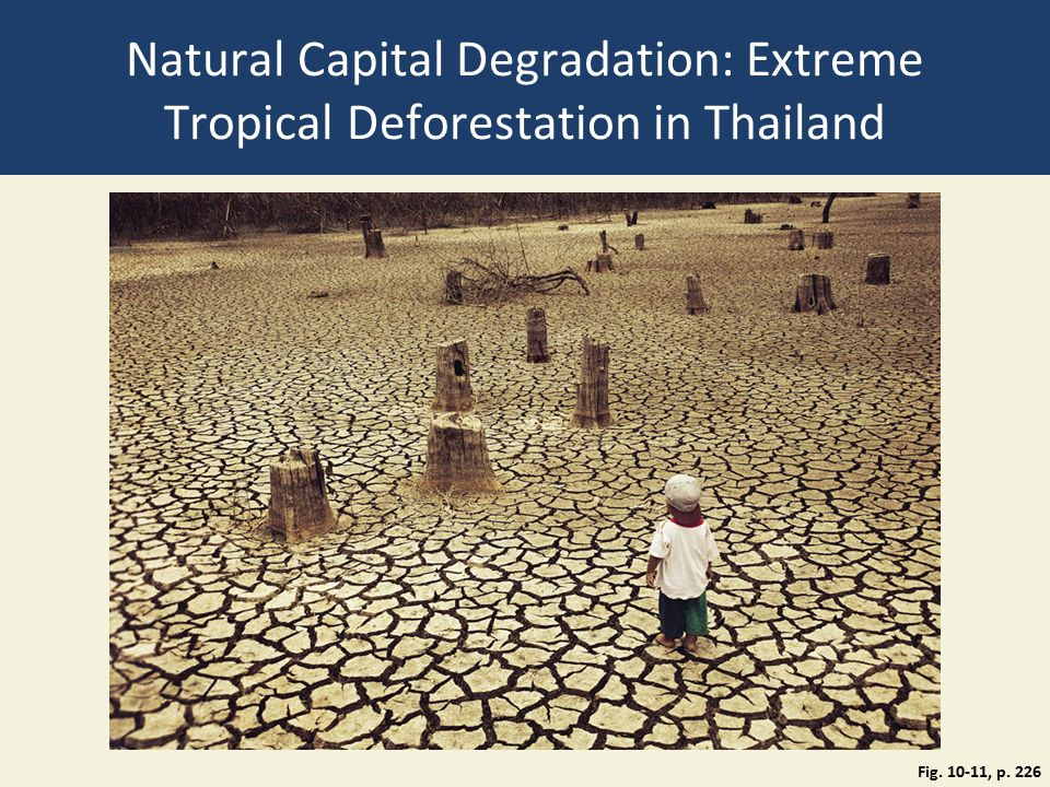 Natural Capital Degradation: Extreme Tropical Deforestation in Thailand Fig. 10-11, p. 226