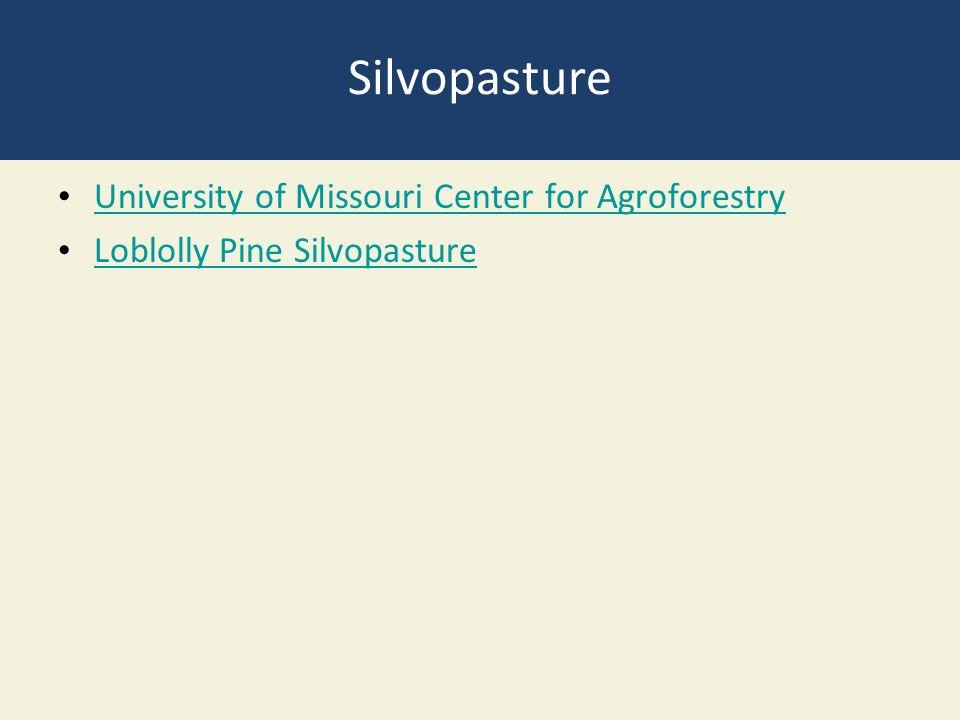 Silvopasture University of Missouri Center for Agroforestry Loblolly Pine Silvopasture
