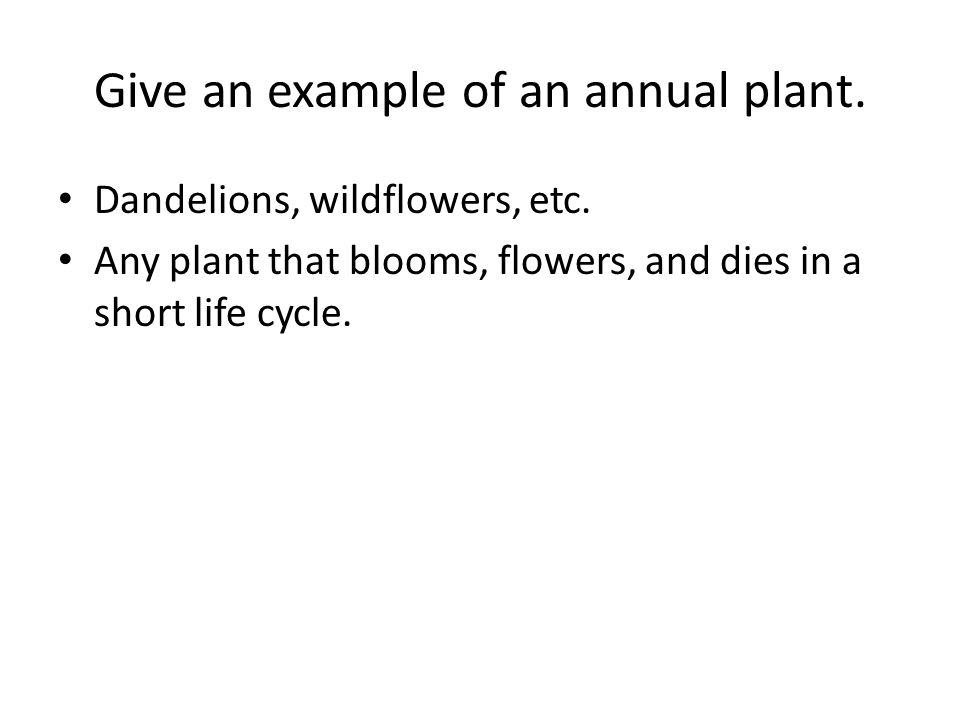 Give an example of an annual plant. Dandelions, wildflowers, etc.