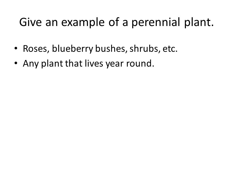 Give an example of a perennial plant. Roses, blueberry bushes, shrubs, etc.
