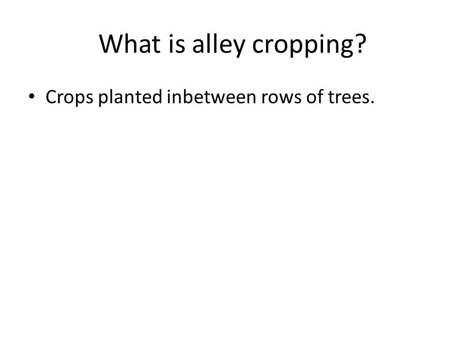 What is alley cropping Crops planted inbetween rows of trees.