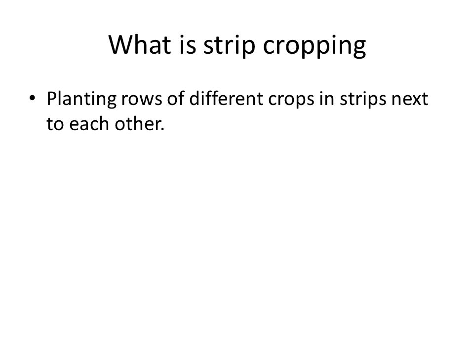 What is strip cropping Planting rows of different crops in strips next to each other.