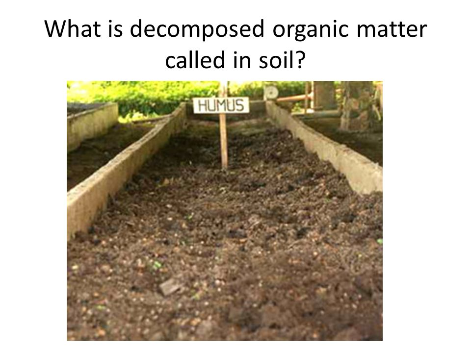 What is decomposed organic matter called in soil