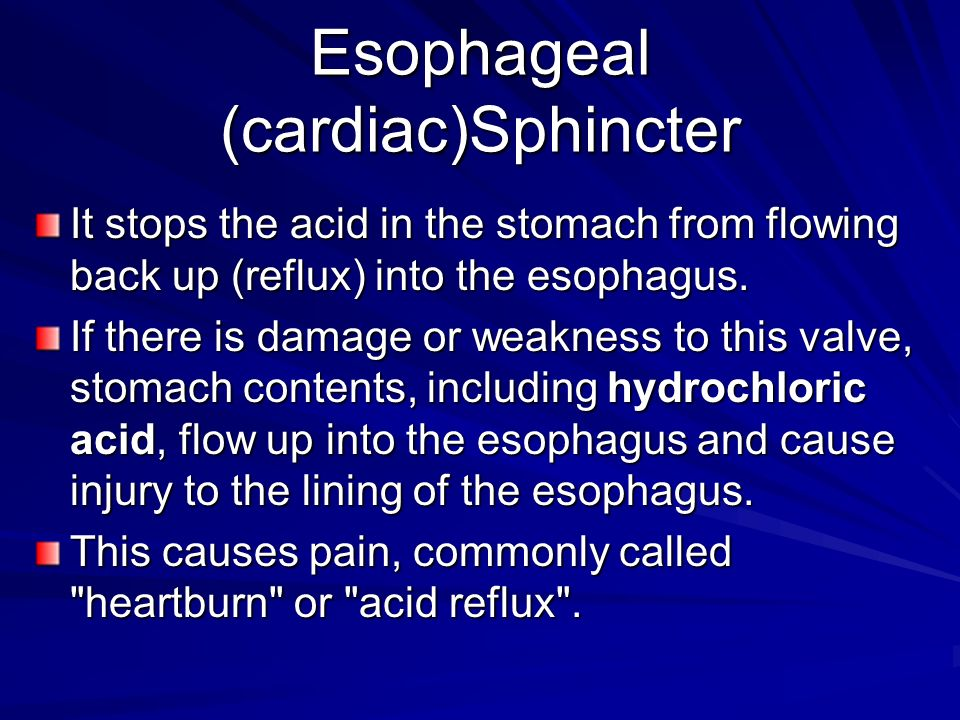 Esophageal (cardiac)Sphincter It stops the acid in the stomach from flowing back up (reflux) into the esophagus.