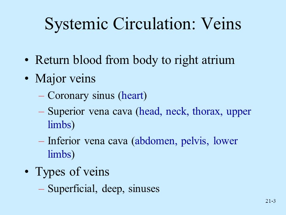 21-3 Systemic Circulation: Veins Return blood from body to right atrium Major veins –Coronary sinus (heart) –Superior vena cava (head, neck, thorax, u