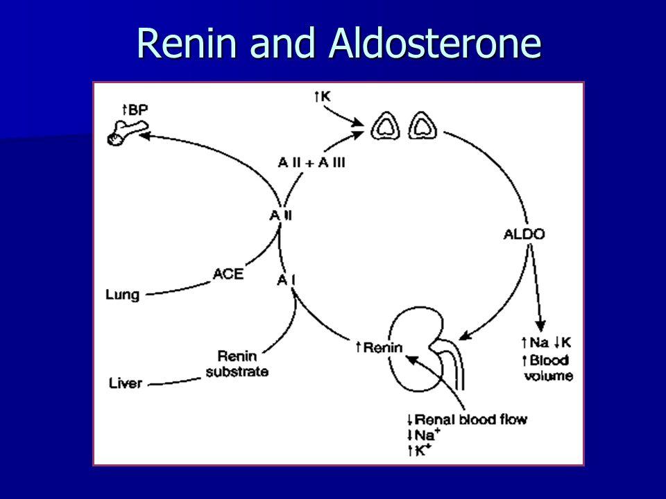 Renin and Aldosterone