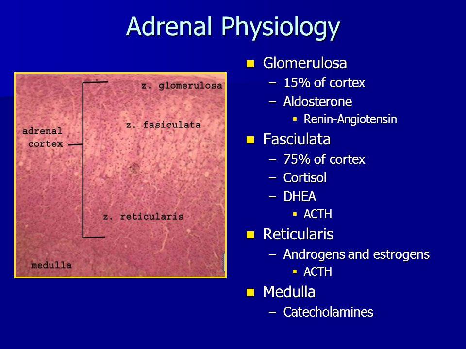 Adrenal Physiology Glomerulosa Glomerulosa –15% of cortex –Aldosterone  Renin-Angiotensin Fasciulata Fasciulata –75% of cortex –Cortisol –DHEA  ACTH Reticularis Reticularis –Androgens and estrogens  ACTH Medulla Medulla –Catecholamines