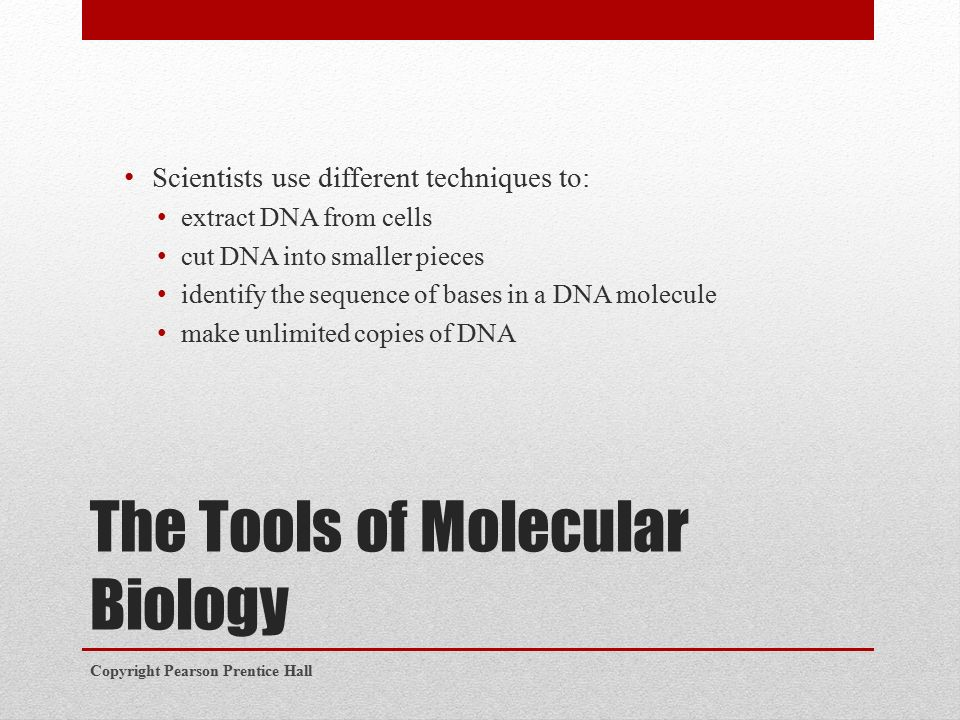 The Tools of Molecular Biology Scientists use different techniques to: extract DNA from cells cut DNA into smaller pieces identify the sequence of bases in a DNA molecule make unlimited copies of DNA Copyright Pearson Prentice Hall