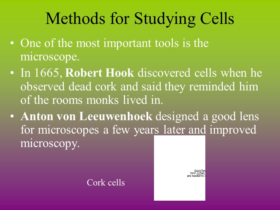 methods for studying cells in the Learn how to study biology easily with the best study 5 study techniques to master biology a good method for this is to try and break down complex words.