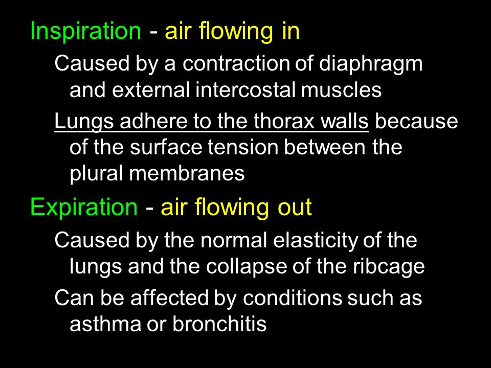 Inspiration - air flowing in Caused by a contraction of diaphragm and external intercostal muscles Lungs adhere to the thorax walls because of the surface tension between the plural membranes Expiration - air flowing out Caused by the normal elasticity of the lungs and the collapse of the ribcage Can be affected by conditions such as asthma or bronchitis