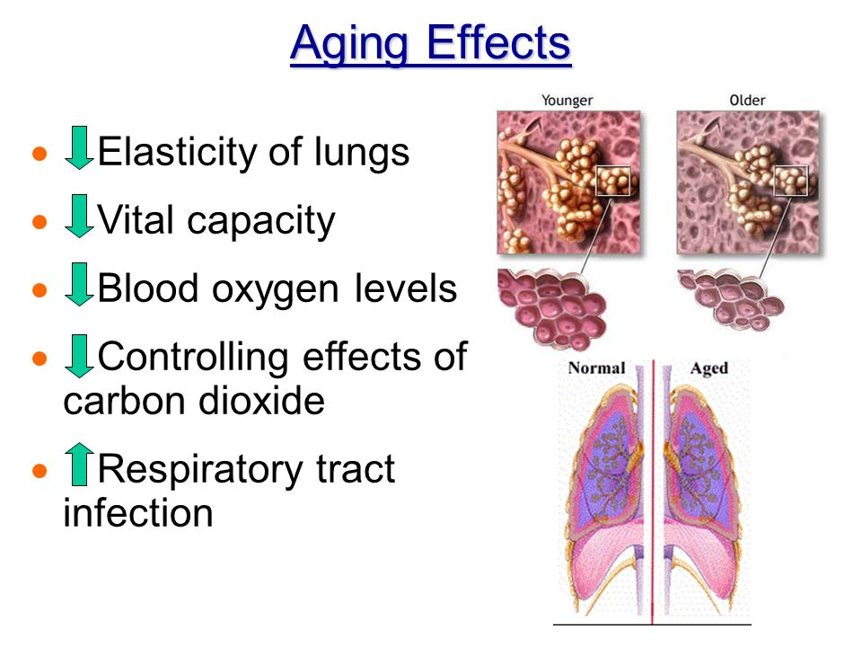 Aging Effects  Elasticity of lungs  Vital capacity  Blood oxygen levels  Controlling effects of carbon dioxide  Respiratory tract infection