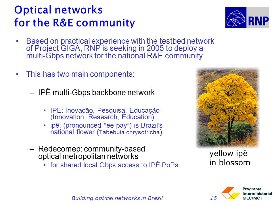 Building optical networks in Brazil16 Optical networks for the R&E community Based on practical experience with the testbed network of Project GIGA, RNP is seeking in 2005 to deploy a multi-Gbps network for the national R&E community This has two main components: –IPÊ multi-Gbps backbone network IPE: Inovação, Pesquisa, Educação (Innovation, Research, Education) ipê: (pronounced ee-pay ) is Brazil's national flower ( Tabebuia chrysotricha ) –Redecomep: community-based optical metropolitan networks for shared local Gbps access to IPÊ PoPs yellow ipê in blossom
