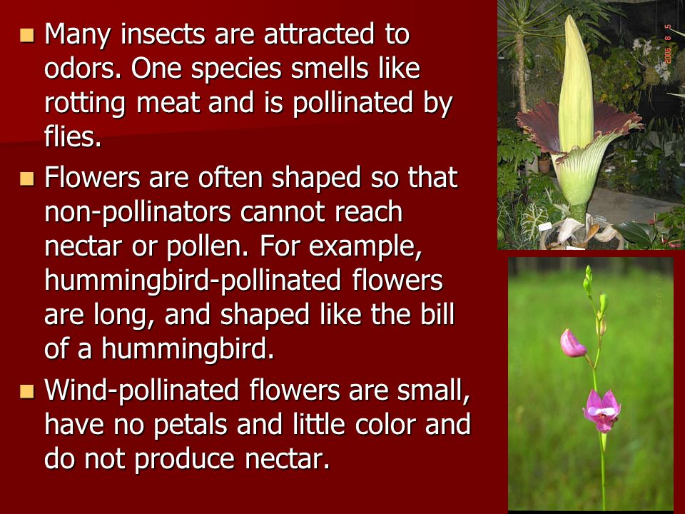 Many insects are attracted to odors.