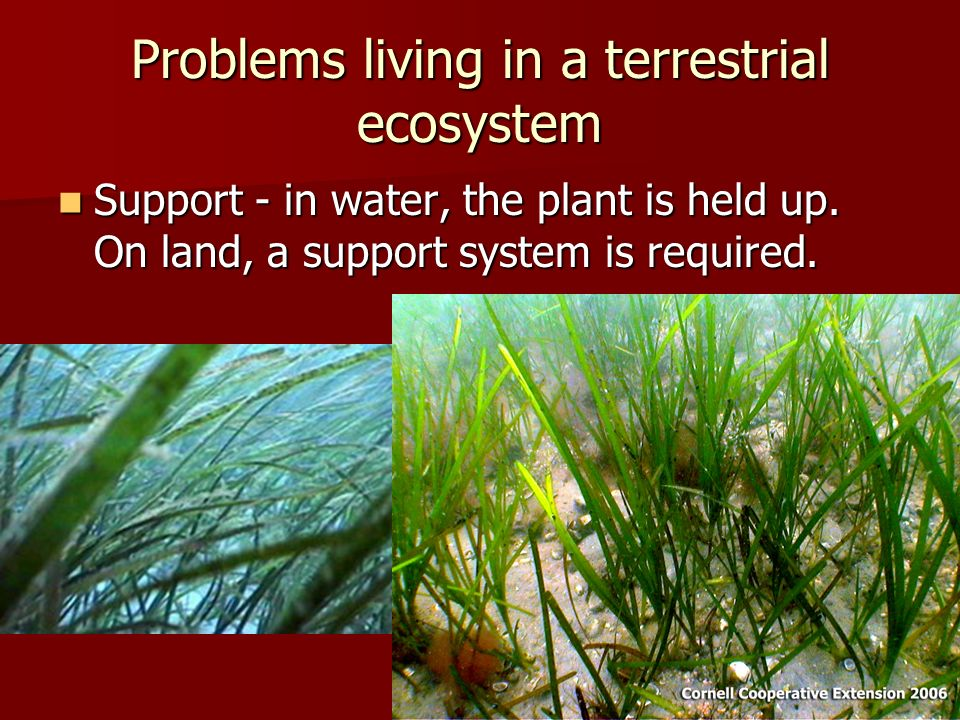 Problems living in a terrestrial ecosystem Support - in water, the plant is held up.