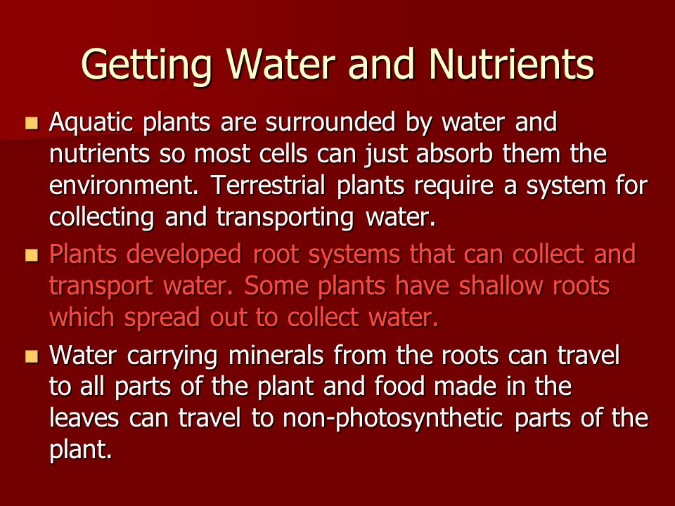 Getting Water and Nutrients Aquatic plants are surrounded by water and nutrients so most cells can just absorb them the environment.