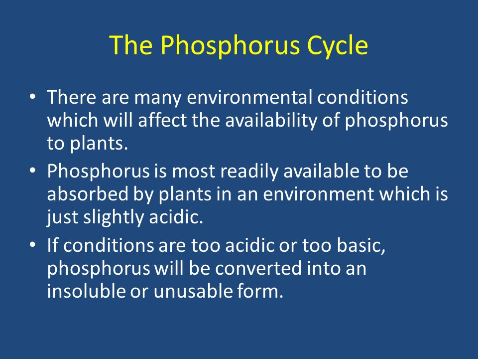There are many environmental conditions which will affect the availability of phosphorus to plants.
