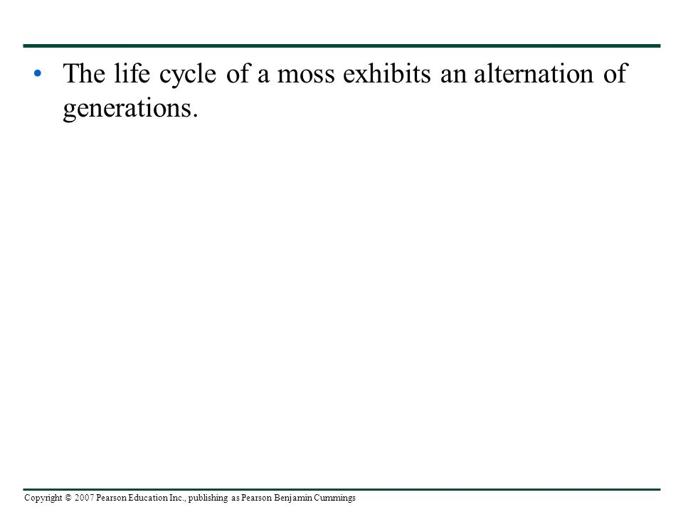 Copyright © 2007 Pearson Education Inc., publishing as Pearson Benjamin Cummings The life cycle of a moss exhibits an alternation of generations.