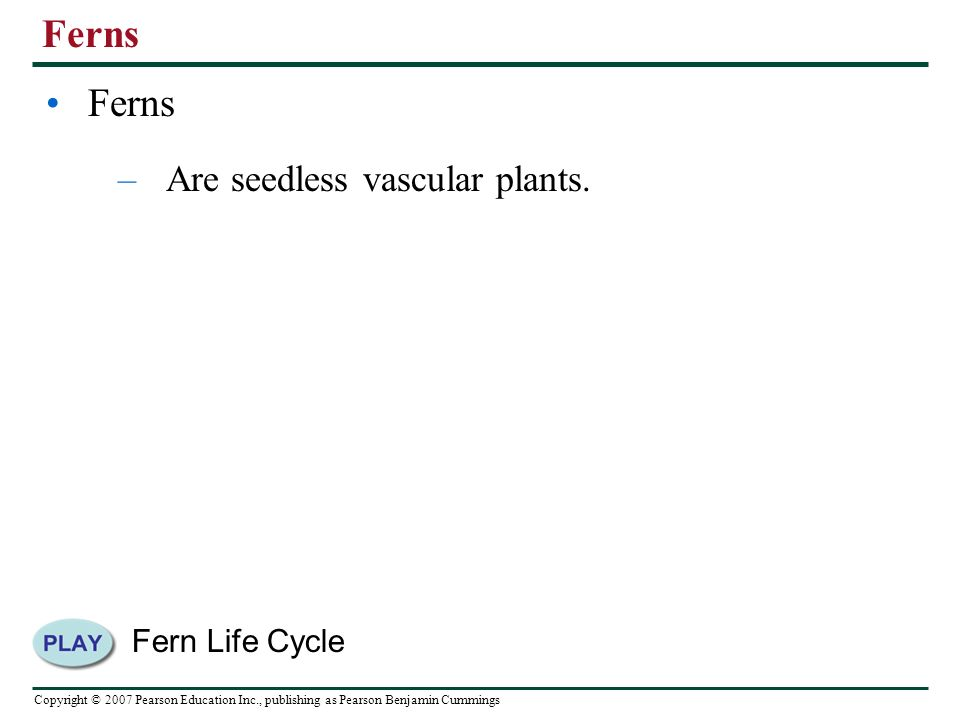 Copyright © 2007 Pearson Education Inc., publishing as Pearson Benjamin Cummings Ferns –Are seedless vascular plants.
