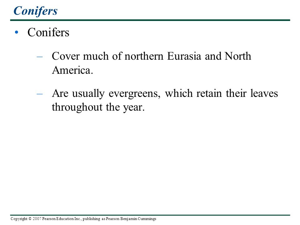 Copyright © 2007 Pearson Education Inc., publishing as Pearson Benjamin Cummings Conifers –Cover much of northern Eurasia and North America.