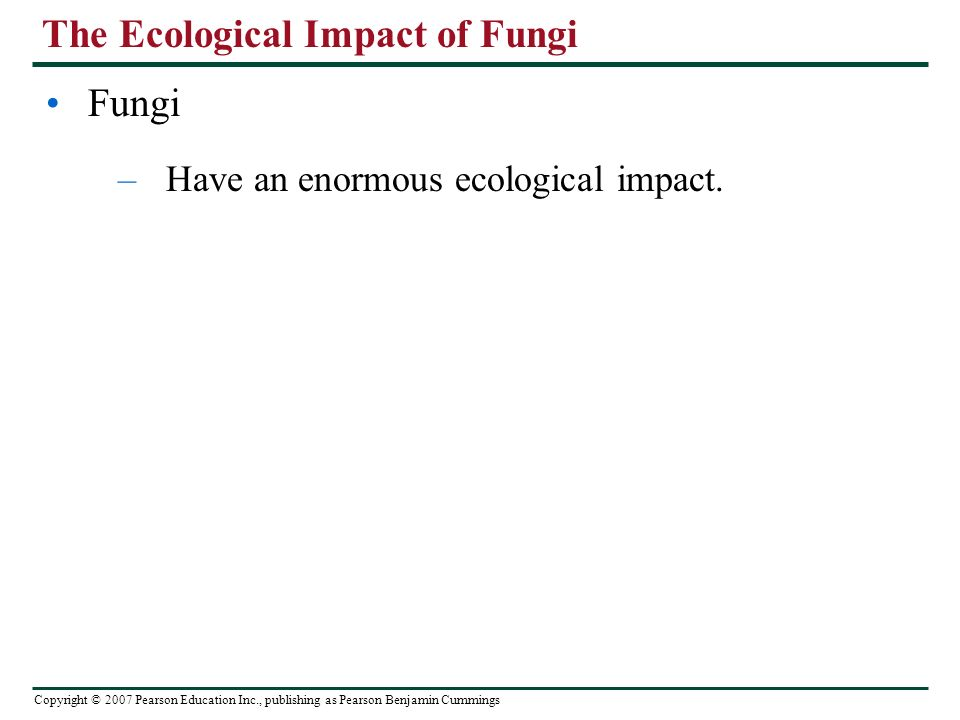 Copyright © 2007 Pearson Education Inc., publishing as Pearson Benjamin Cummings The Ecological Impact of Fungi Fungi –Have an enormous ecological impact.