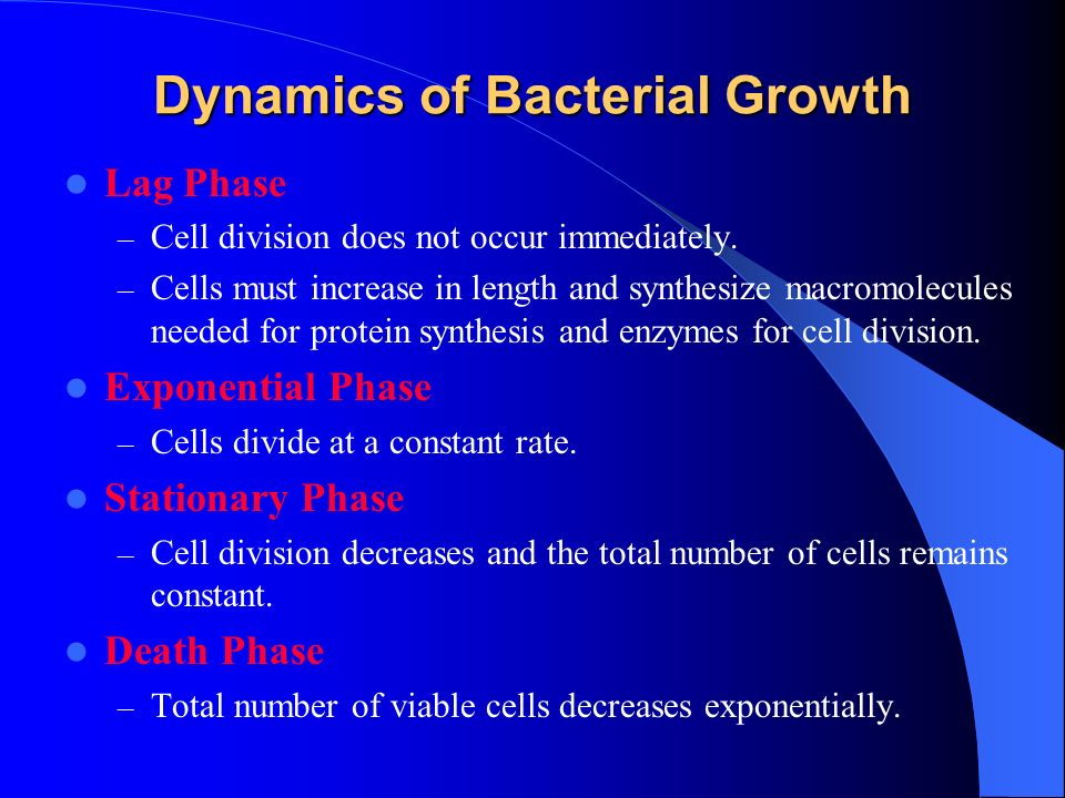 Dynamics of Bacterial Growth Lag Phase – Cell division does not occur immediately.