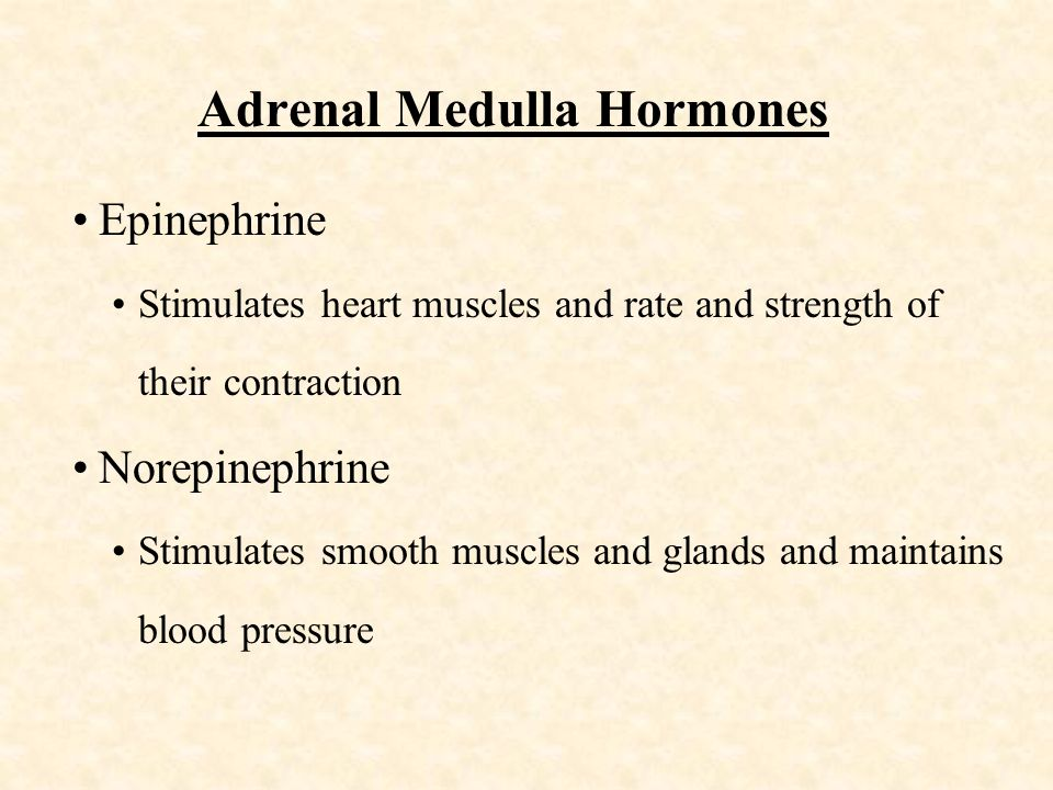 Adrenal Medulla Hormones Epinephrine Stimulates heart muscles and rate and strength of their contraction Norepinephrine Stimulates smooth muscles and glands and maintains blood pressure
