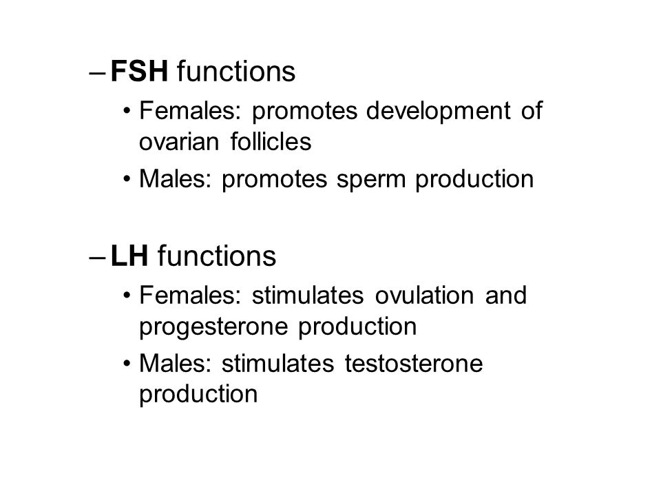 –FSH functions Females: promotes development of ovarian follicles Males: promotes sperm production –LH functions Females: stimulates ovulation and progesterone production Males: stimulates testosterone production