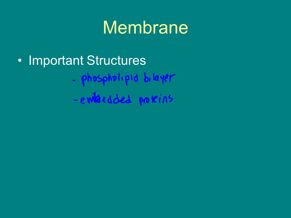Membrane Important Structures
