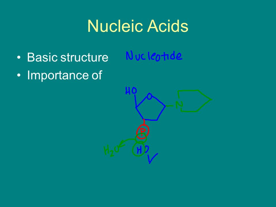 Nucleic Acids Basic structure Importance of