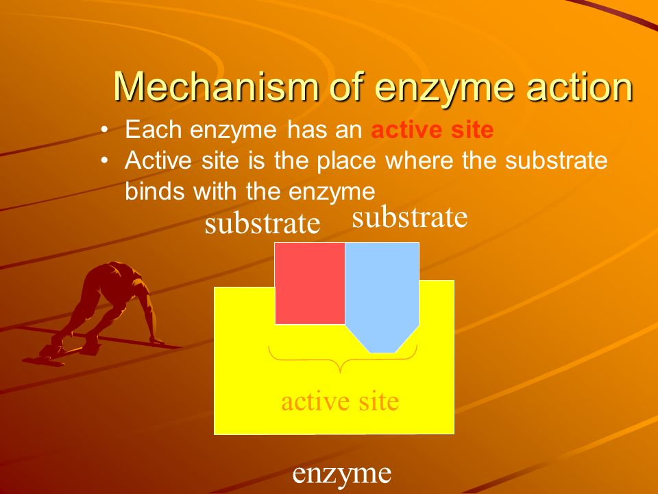 Enzymes remain unchanged.