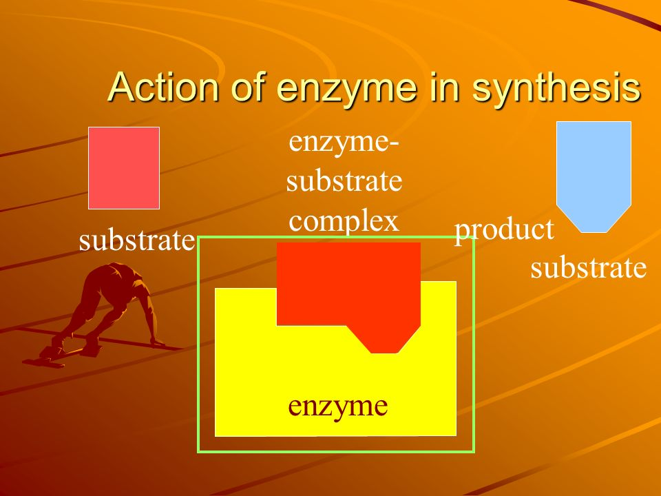 substrate enzyme active site substrate Mechanism of enzyme action Each enzyme has an active site Active site is the place where the substrate binds with the enzyme