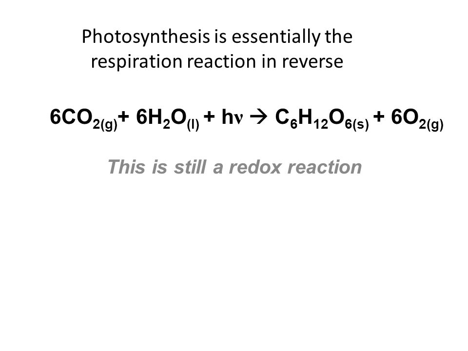 photosynthesis and chromatography essay