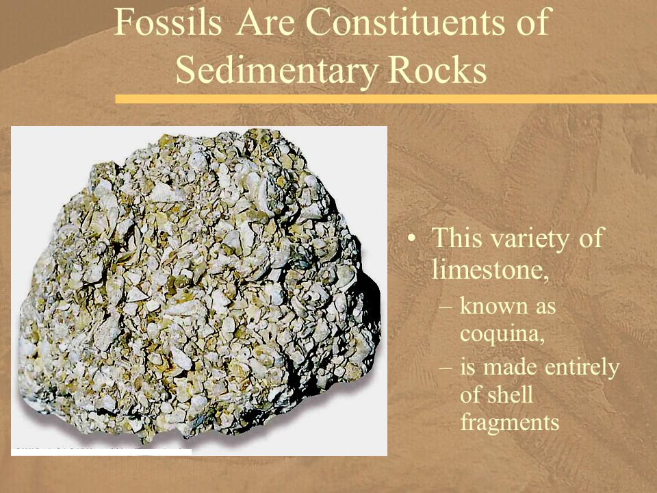 an analysis of the topic of the fossil project