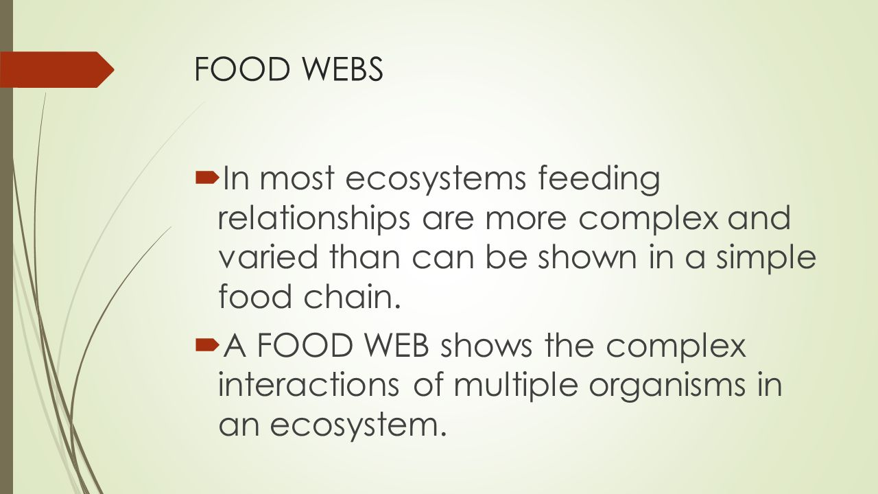 FOOD WEBS  In most ecosystems feeding relationships are more complex and varied than can be shown in a simple food chain.