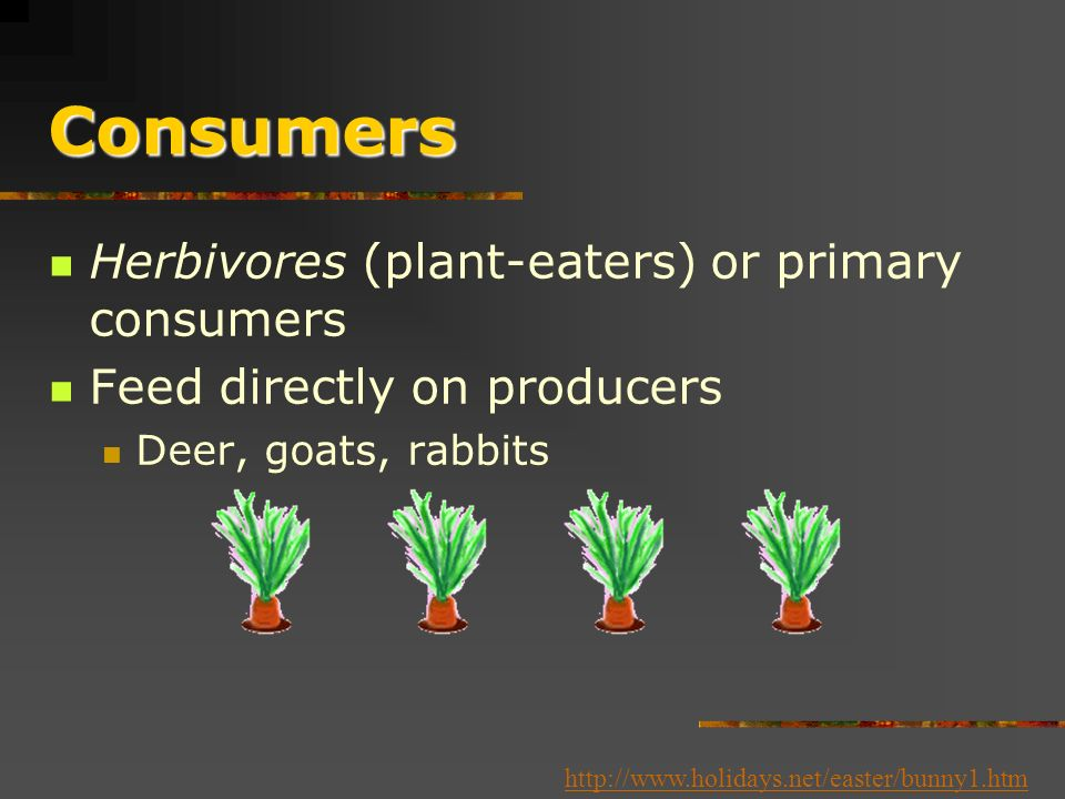 Consumers or Heterotrophs Obtain energy and nutrients by feeding on other organisms or their remains