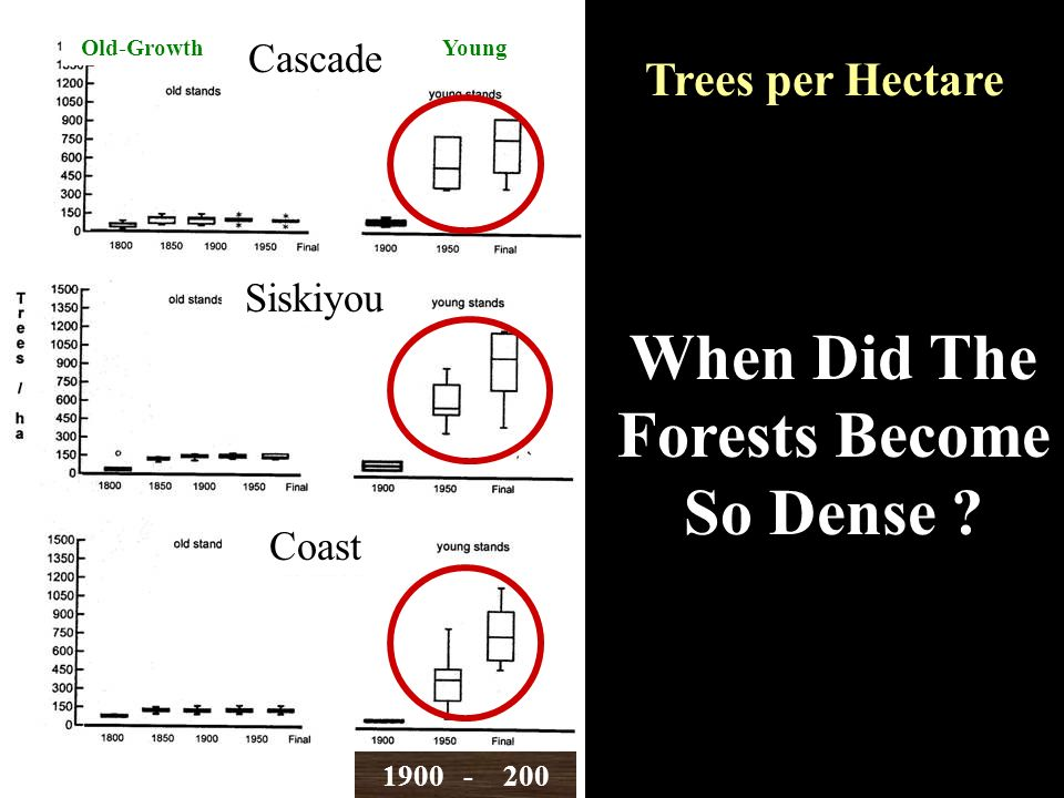 Trees per Hectare Old-Growth Cascade Siskiyou Coast When Did The Forests Become So Dense .